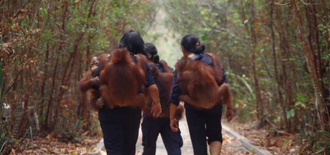 2015 Fire Season at the Orangutan Care Center