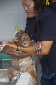 Rimba get a bath